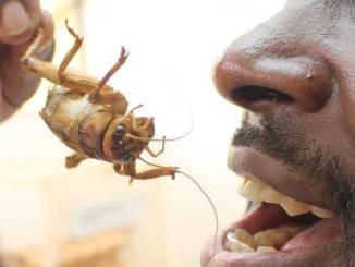 endomologie Promouvoir l'entomologie en Afrique