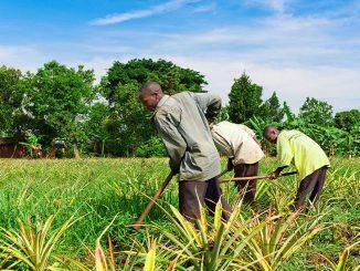 agriculteurs ok Togo: une nouvelle mesure annoncée pour aider les agriculteurs