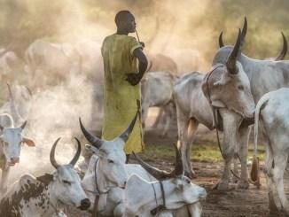 Transhumance Togo Togo : la saison de transhumance enfin ouverte