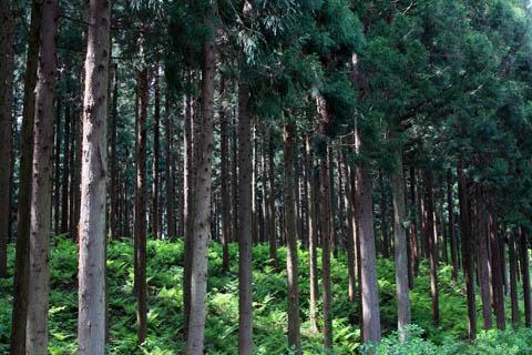 Forest001-01.jpg