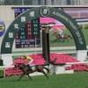 クィーンエリザベス2世カップは香港の競馬場で行われます。