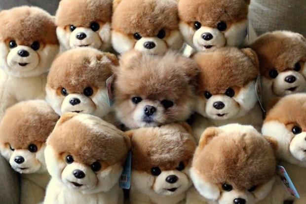 hiding-ninja-funny-dogs