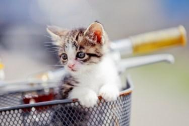 猫がネズミを捕食するのは狩猟本能から!外に出さないことが一番
