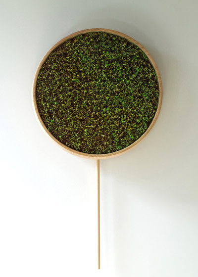 coniferous clock / Bril