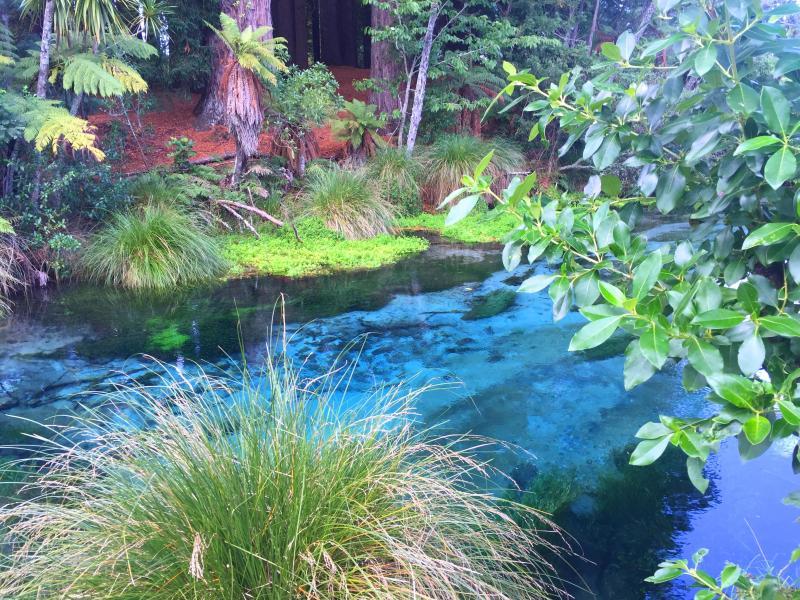 nova zelandia rotorua hamurana spring