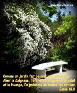 Comme un jardin fait pousser ses semences, ainsi le Seigneur, l'Éternel, fera germer le salut et la louange, en présence de toutes les nations