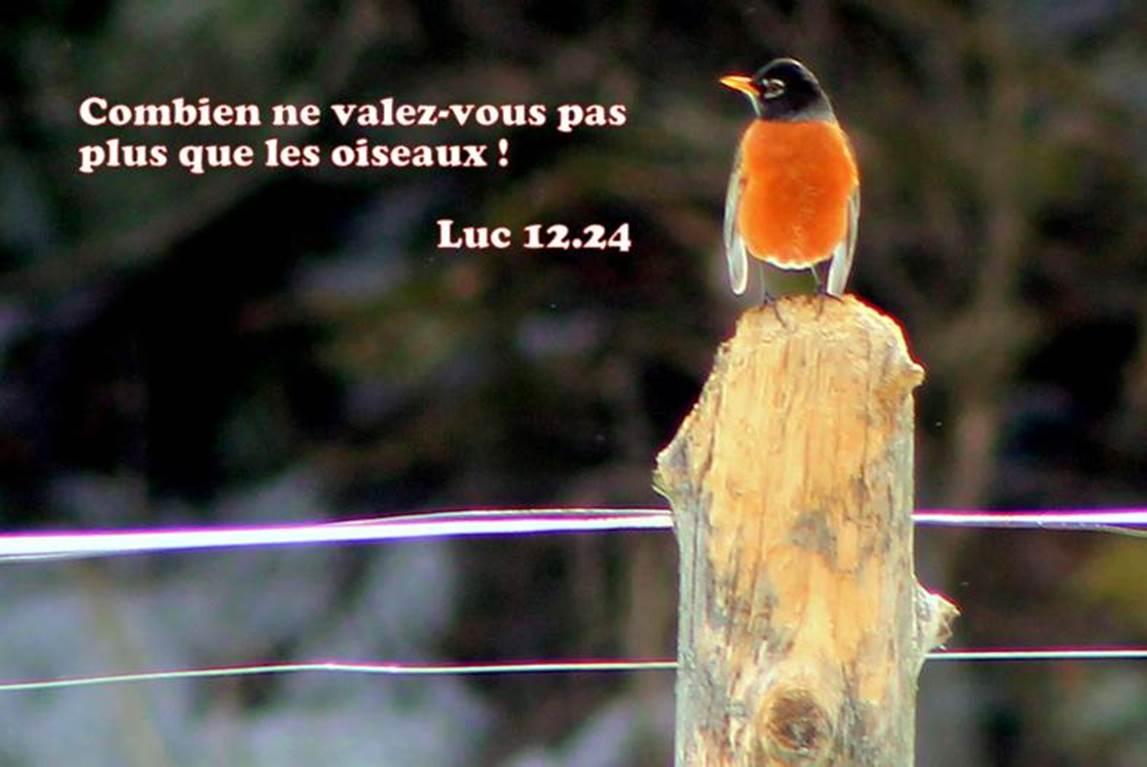 Luc 12.24
