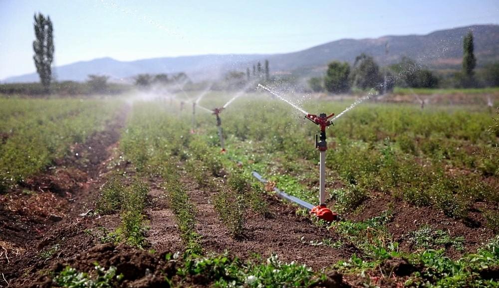 Tokat'ta sulu tarımla ülke ekonomisine 360 milyon katkı sağlandı