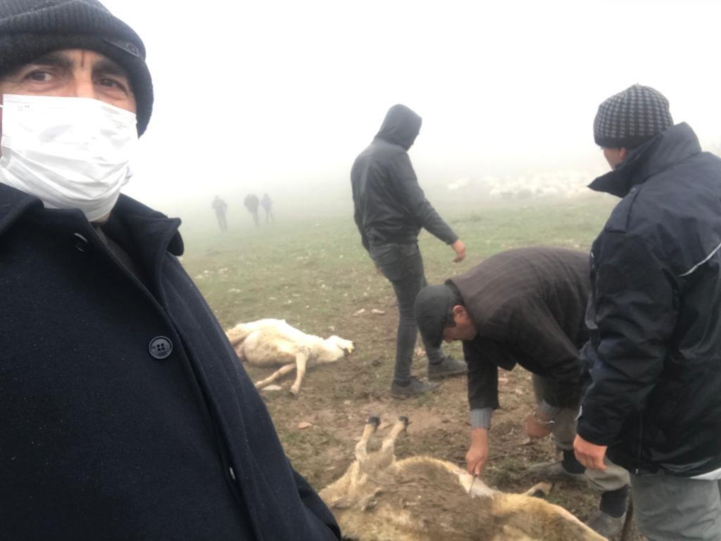Tokat'ta 20 koyun telef oldu, zehirlenme iddiası üzerine inceleme başlatıldı