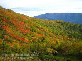 大雪山銀泉台の紅葉