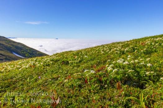 平標山から仙ノ倉山にかけてのお花畑と赤城山