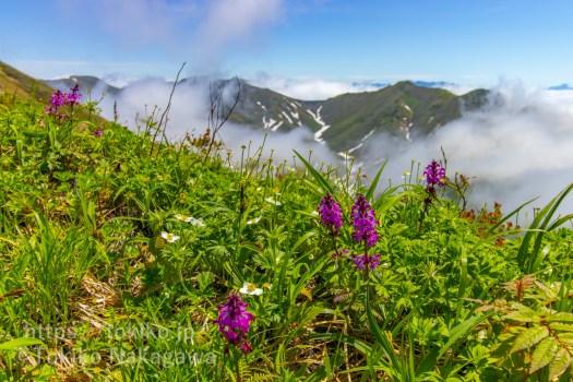 万太郎山近くの花々