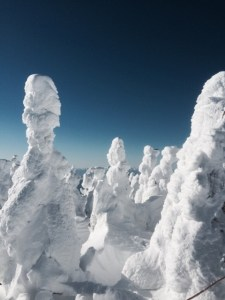 蔵王 樹氷 枯れる 見れ ない