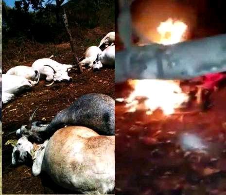 ESN Attack on Fulani Herdsmen