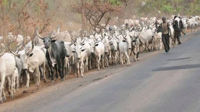 """""""The Way Fulani Herdsmen Are Being Maltreated In Southern States Is Unacceptable"""" - Governor Ganduje"""