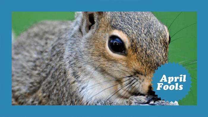 squirrel-aprilfools