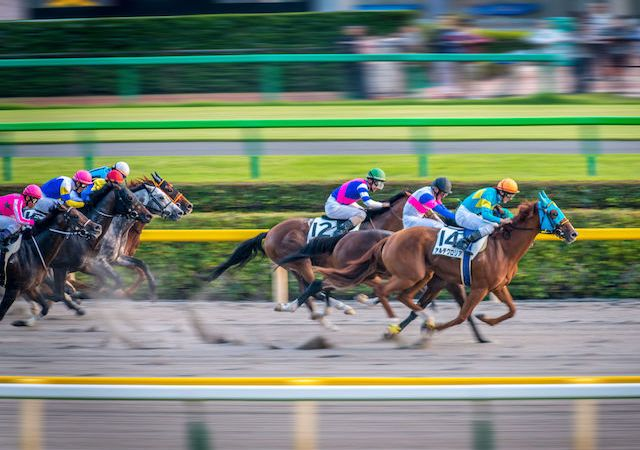 what to do in tokyo, try experience horse race