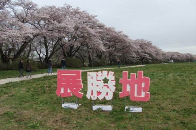 北上展勝地桜開花予想