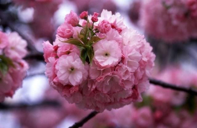 造幣局桜の通り抜けアクセス