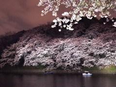 千鳥ヶ淵・桜
