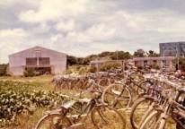 この体育館は、2階建て校舎と同時に昭和40年に完成しました。(左手前は蓮池)