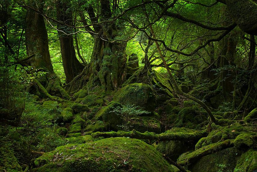 Yakushima Nationaal Park