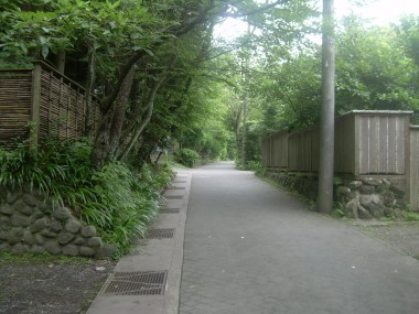Daibutsu hiking trail. The start is paved, but once you walk by a small bamboo forest and up some steps, the paved road dissappears