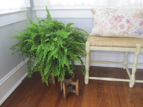 Boston fern and Ballard Designs bench