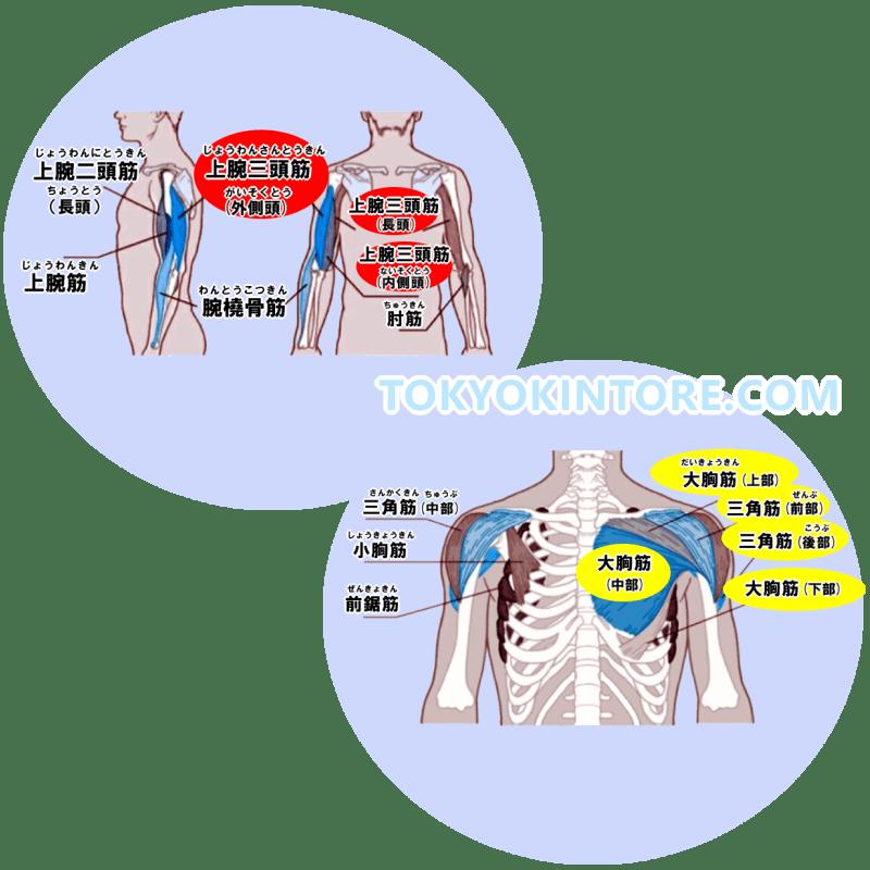 上腕三頭筋と大胸筋と三角筋に効果を出す筋トレのやり方とフォーム