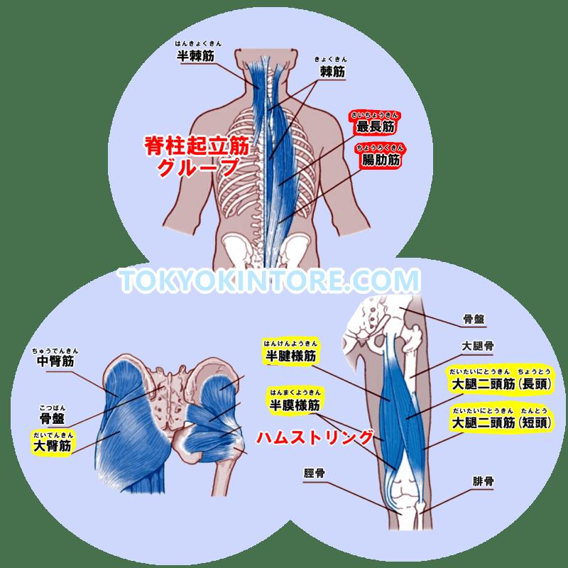 脊柱起立筋下部と大臀筋とハムストリングを鍛えるやり方とフォーム