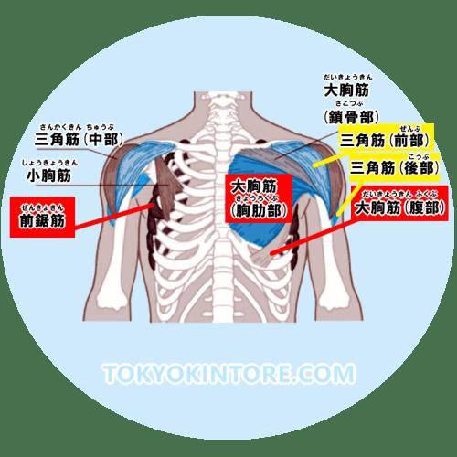 大胸筋・前鋸筋に効果を出すやり方とフォーム
