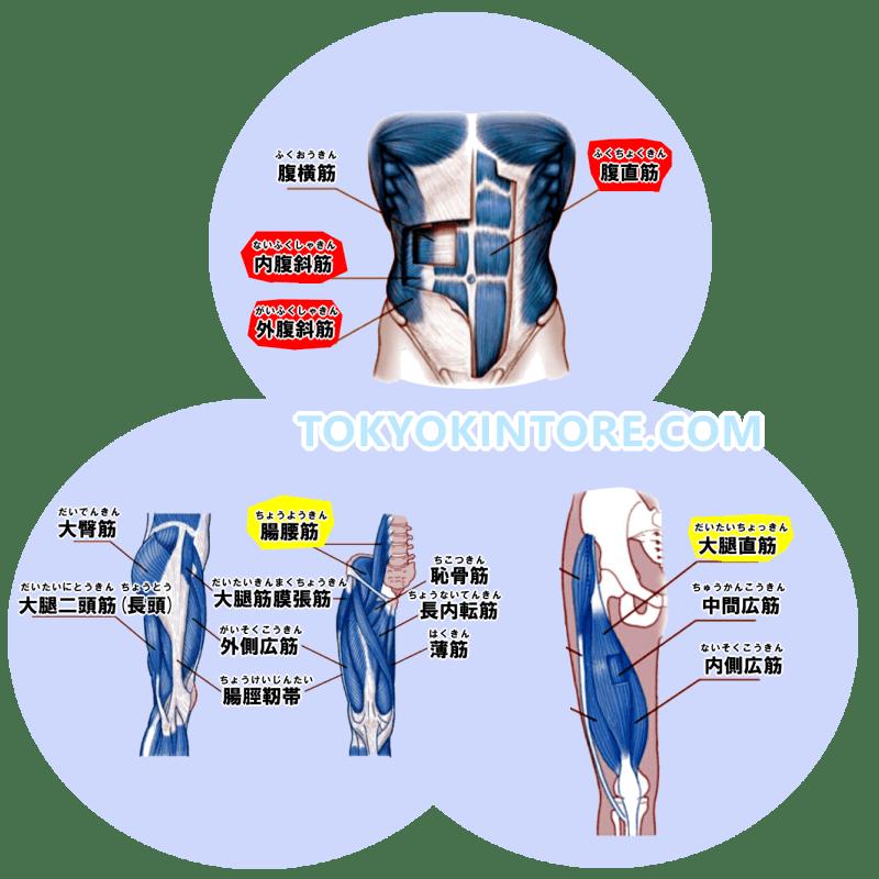 腹直筋と腹斜筋を鍛えるやり方とフォーム
