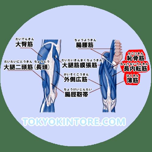 【東京筋トレ】内転筋を鍛えるやり方とフォーム