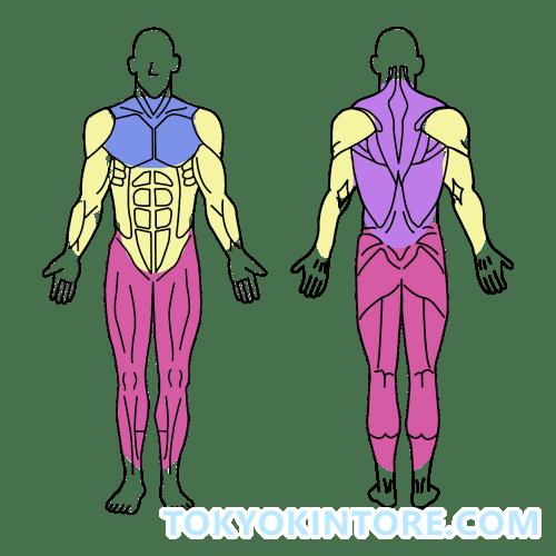 大きい筋肉から鍛えよう