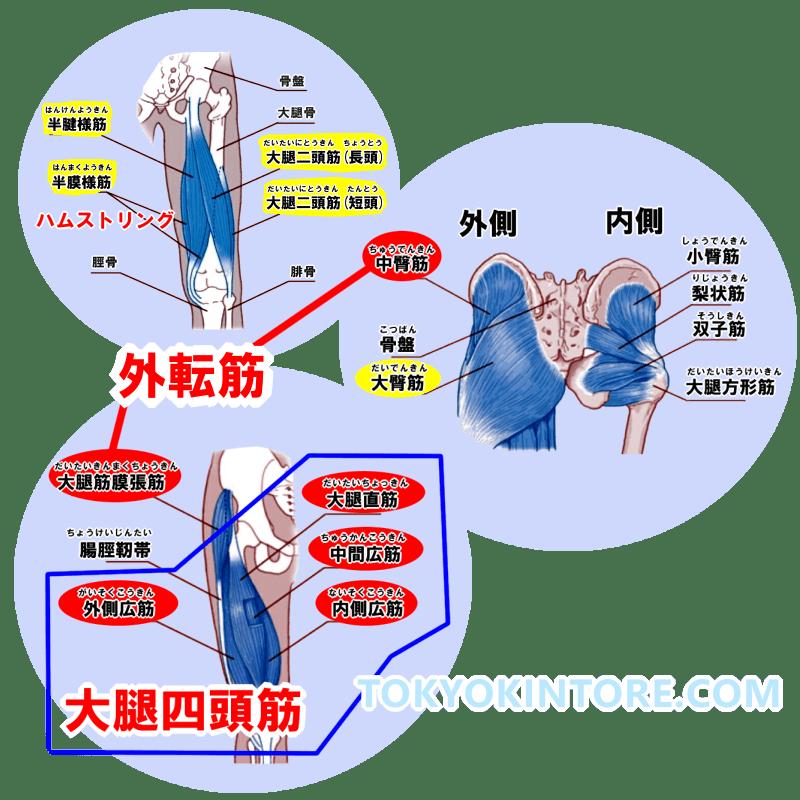 外転筋と大腿四頭筋と大臀筋とハムストリングを鍛えるやり方とフォーム