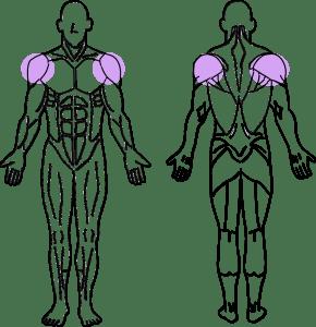スーパーセット法トレーニング~三角筋前部と三角筋後部