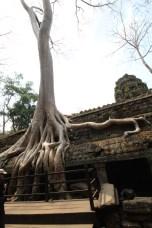 Ta Prohm, Camboja