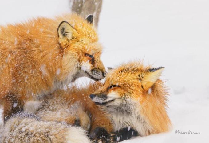 『最果ての荒野で紡がれる愛』