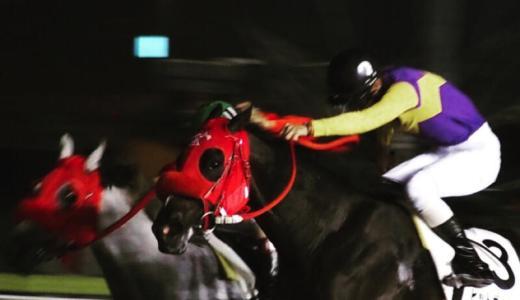 【東京シティ競馬】大井競馬場でトゥウィンクルレースを楽しむの巻