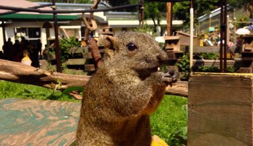 たくさんの小動物とふれあえる「町田リス園」に行ってきた!