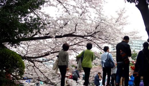 【新宿御苑】1,100本の桜が咲き誇る都内屈指の桜の名所を花見さんぽ