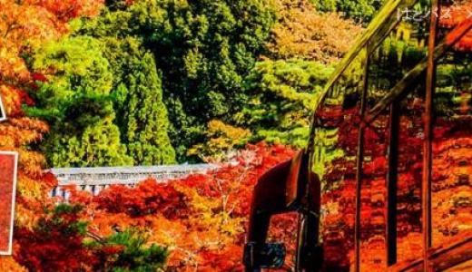 【東京発】日帰りで行ける紅葉バスツアーまとめ
