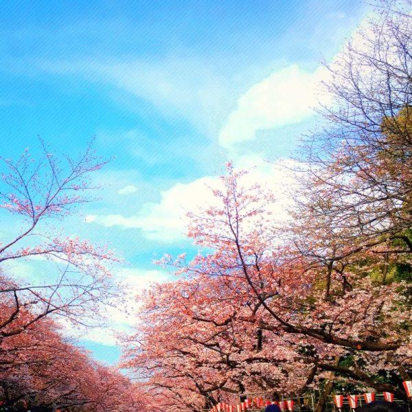 20170404 花見 at 上野公園