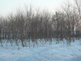 平野一面に霜・霜・霜