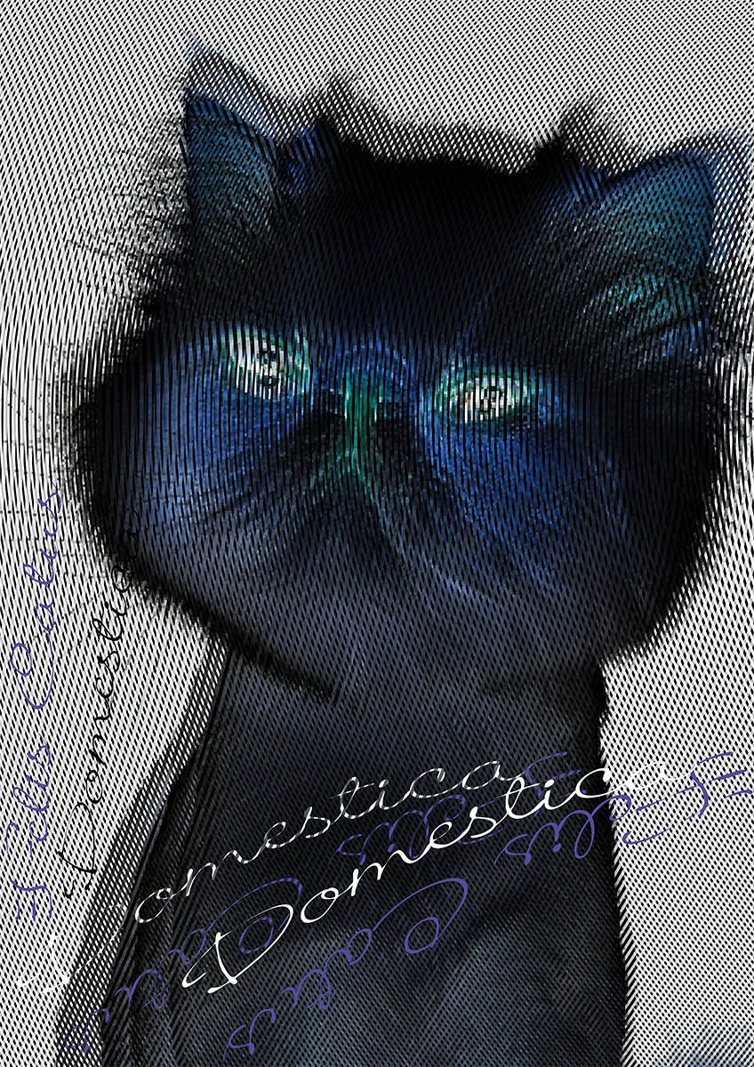 Cat / 2015 | Poster
