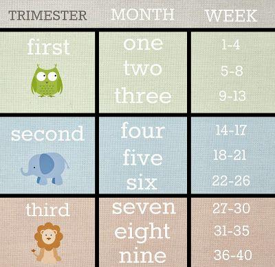 pregnancy-chart