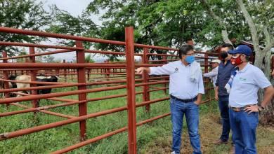 Photo of El Tolima ya cuenta con Plan Departamental de Extensión Agropecuaria-PDEA