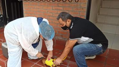 Photo of Prográmese para las jornadas de vacunación contra la rabia canina y felina