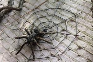Tol Secretarie is de spin die uw web in de gaten houdt!