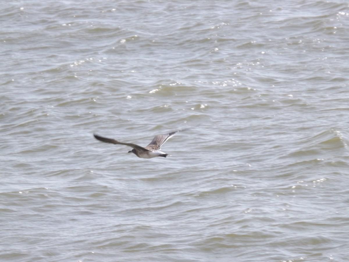 seagull galveston ferry
